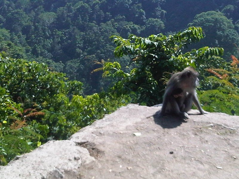 Hutan Pusuk, Lombok.